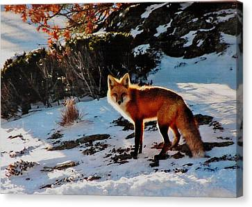 Canvas Print featuring the photograph Red Fox In Winter by Diane Alexander