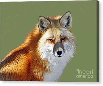 Red Fox Canvas Print