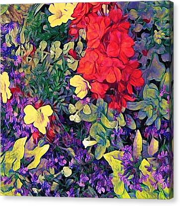 Red Geranium With Yellow And Purple Flowers - Square Canvas Print by Lyn Voytershark