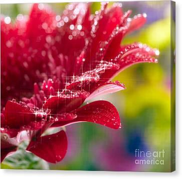 Red Gerbera  Flower Canvas Print