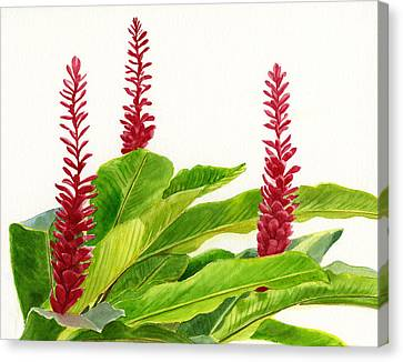 Red Ginger Flowers Canvas Print by Sharon Freeman