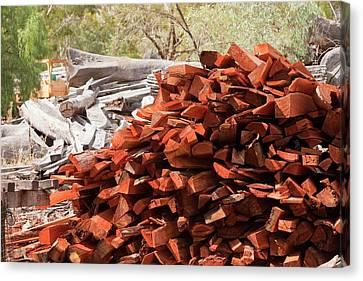 Red Gum Timber At A Timber Yard Canvas Print by Ashley Cooper