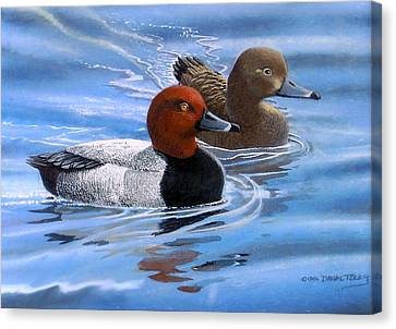 Red Headed Ducks Canvas Print by Dan Terry