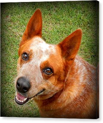 Red Heeler Canvas Print by Lynn Griffin