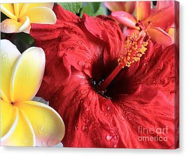 Canvas Print - Red Hibiscus by Kristine Merc