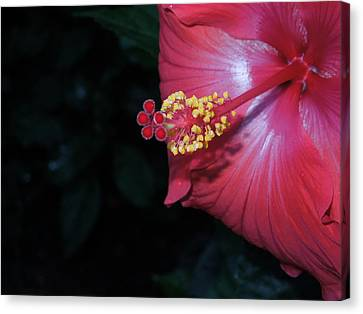 Canvas Print featuring the photograph Red Hibiscus by Ron Davidson