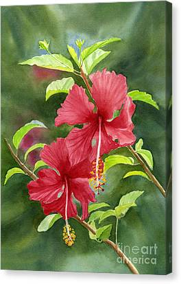 Red Hibiscus With Background Canvas Print by Sharon Freeman