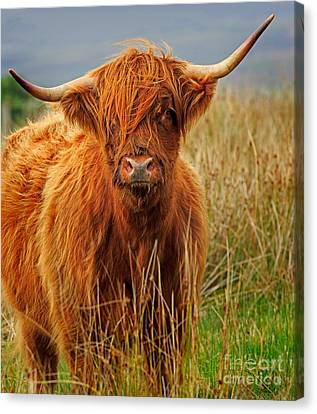Red Highland Cow Canvas Print by Louise Heusinkveld