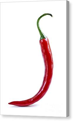 Red Hot Chili Pepper Canvas Print by Elena Elisseeva