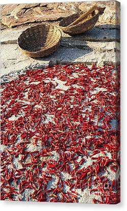 Arable Canvas Print - Red Hot Chilli Peppers by Tim Gainey