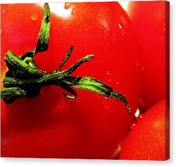 Red Hot Tomato Canvas Print