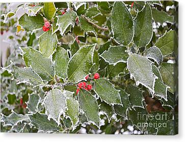 Canvas Print featuring the photograph Red In Winter by Felicia Tica