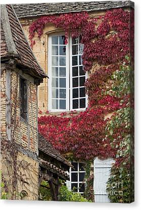 Canvas Print featuring the photograph Red Ivy Window by Paul Topp