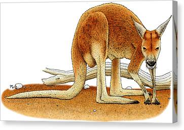 Red Kangaroo Canvas Print by Roger Hall