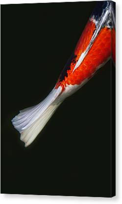 Red Koi Tail Down Vertical Canvas Print by Rebecca Cozart