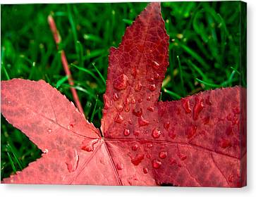 Red Leaf Canvas Print by Crystal Hoeveler