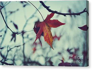 Red Leaf Canvas Print by Jelena Jovanovic