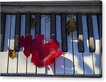 Red Leaf On Old Piano Keys Canvas Print by Garry Gay