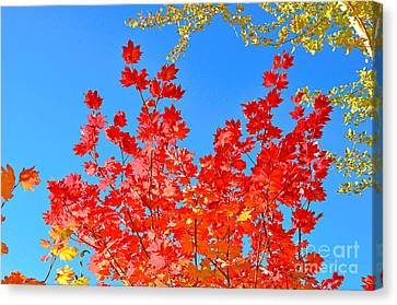 Canvas Print featuring the photograph Red Leaves by David Lawson