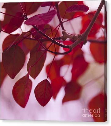 Red Leaves Canvas Print by Sharon Mau