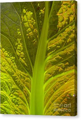 Red Lettuce Veins Canvas Print