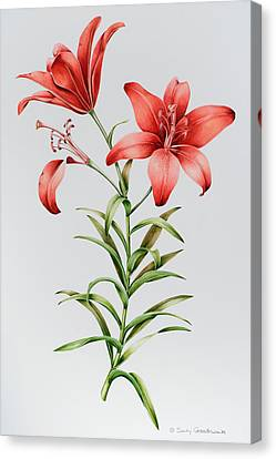 Red Lilies Canvas Print by Sally Crosthwaite
