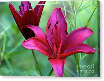 Red Lillies Canvas Print