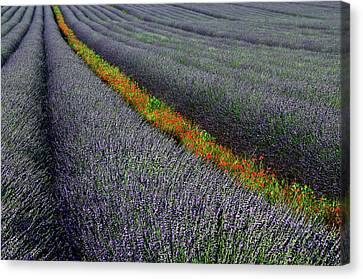 Plantation Canvas Print - Red Line by Izidor Gasperlin