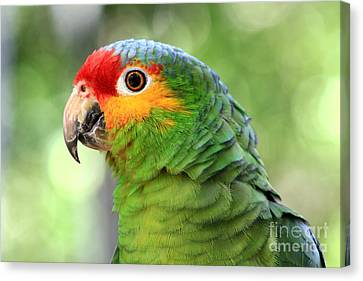 Red-lored Amazon Parrot Canvas Print by Teresa Zieba