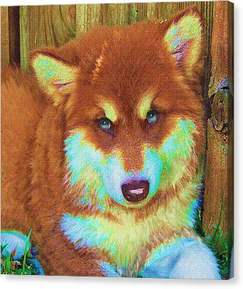 Red Malamute Canvas Print by Jane Schnetlage