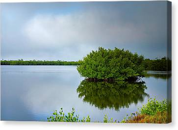 Red Mangrove Marsh I Canvas Print by Steven Ainsworth