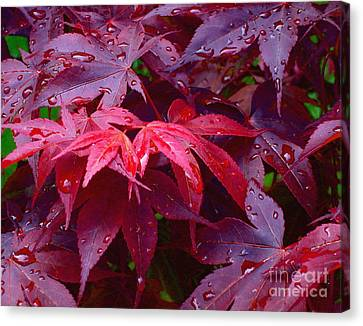 Red Maple After Rain Canvas Print by Ann Horn