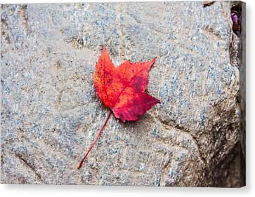 Red Maple Leaf On Granite Stone In Horizontal Format Canvas Print by Karen Stephenson