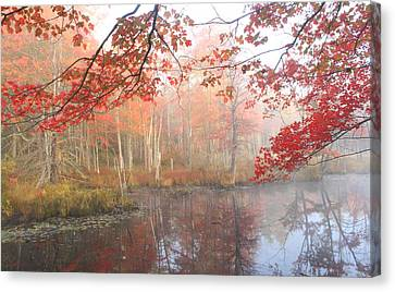 Red Maple Wetland Fall Foliage Canvas Print by John Burk