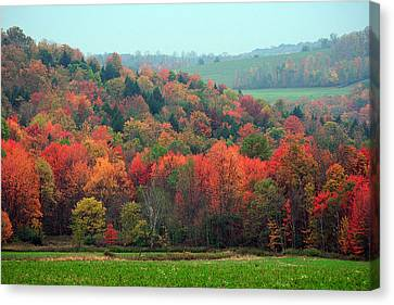 Red Maples Canvas Print by David Simons