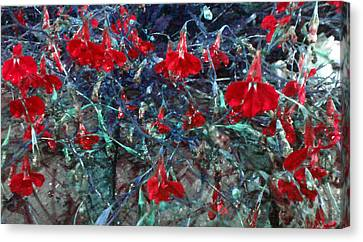 Red Mountain Flowers Canvas Print by Diana Burlan