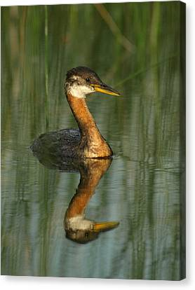 Canvas Print featuring the photograph Red-necked Grebe by James Peterson