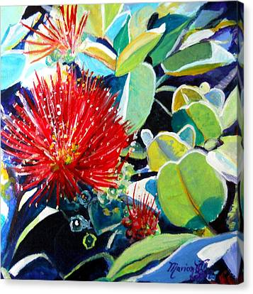 Red Ohia Lehua Flower Canvas Print
