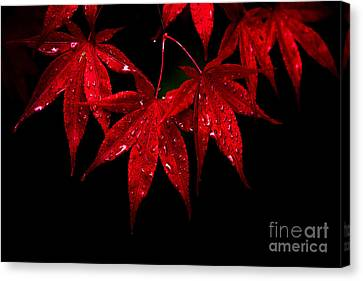 Autumn Leaf On Water Canvas Print - Red On Black by Joy McAdams
