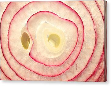 Red Onion Slice Miniature Art Canvas Print by Paul Ge