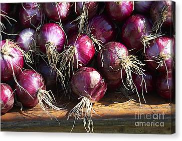 Farm Stand Canvas Print - Red Onions by Tony Cordoza