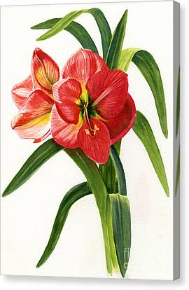 Red-orange Amaryllis Canvas Print by Sharon Freeman
