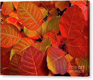 Canvas Print featuring the photograph Red Orange Leaves by Charles Lupica