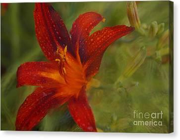Red Orange Lily Canvas Print by Jennifer Apffel