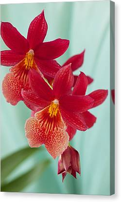 Red Orchids On Blue Canvas Print by Bonita Hensley