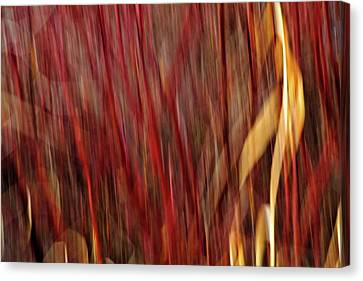 Red Osier Dogwood Canvas Print by Theresa Tahara