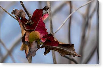 Red Over Branch Canvas Print
