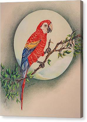Canvas Print featuring the drawing Red Parrot by Ethel Quelland