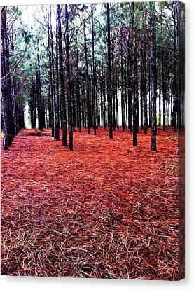 Red Path Canvas Print