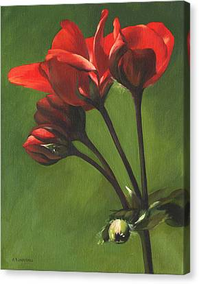 Red Pelargonium Canvas Print